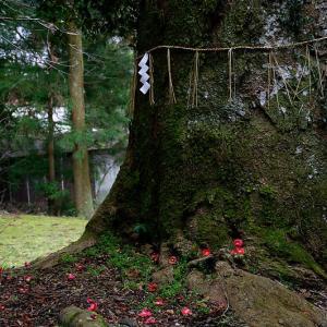 散り椿@花尻の森&白雲神社