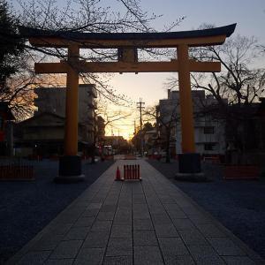 2020桜巡り@平野神社 魁桜