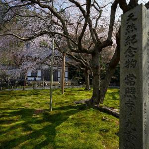 2020桜巡り@京北町 常照皇寺