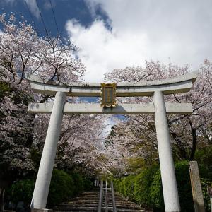 2020桜巡り@宗忠神社