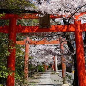 2020桜巡り@竹中稲荷神社