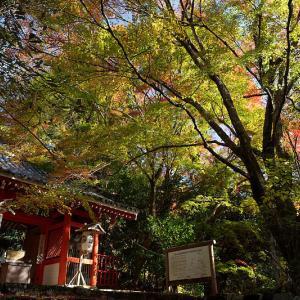 2018京都の紅葉・洛西 金蔵寺 其の一