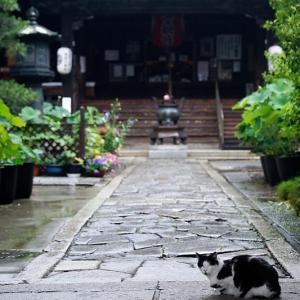町角ニャンコ・雨の日のニャンコ