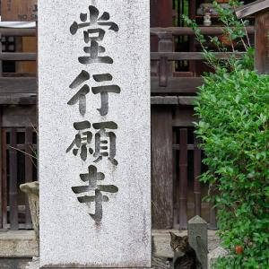 町角ニャンコ・行願寺のニャンコ