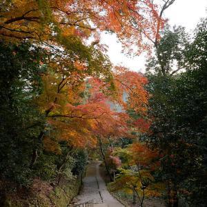 2020京都の紅葉・高雄 神護寺