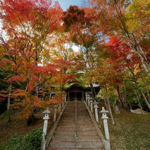 2020京都の紅葉・吉富 西光寺