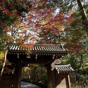 2018京都の紅葉・修学院 赤山禅院