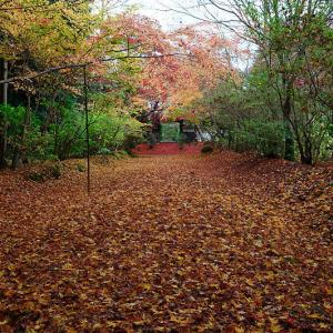 2020京都の紅葉・亀岡 内緒のお寺