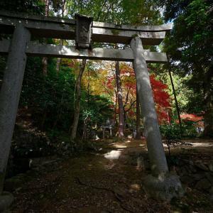 2020京都の紅葉・嵯峨野 護法堂弁財天