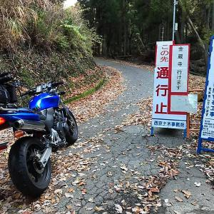 2020京都の紅葉・洛西 金蔵寺 其の一