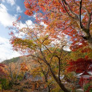 2020京都の紅葉・洛西 金蔵寺 其の二