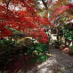 2020京都の紅葉・洛西 勝持寺
