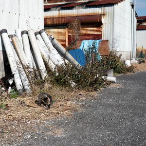 町角ニャンコ・2021年初猫撮り@堅田漁港 其の二