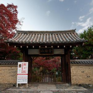 2020京都の紅葉・嵯峨 鹿王院