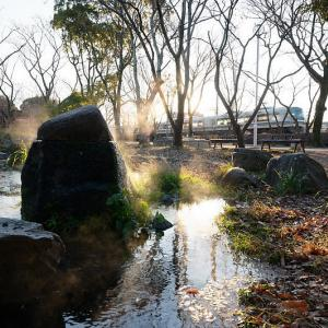 冷え込んだ朝@梅小路公園