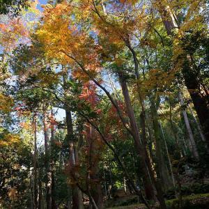 2020京都の紅葉・鹿ヶ谷 法然院