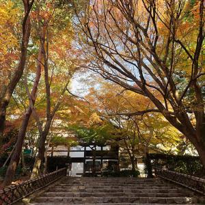 2020京都の紅葉・衣笠 竜安寺 其の二