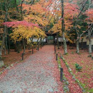 2020京都の紅葉・上桂 地蔵院