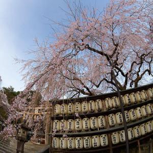2021桜巡り 枝垂れ桜@大石神社