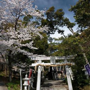 2021桜巡り 枝垂れ桜@六所神社