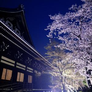 2021桜巡り 夜桜ライトアップ@妙顕寺・其の一