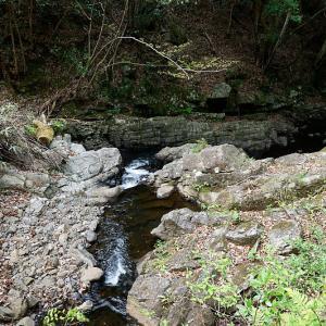滋賀県日野遠征・其の二 鎌掛谷ほんしゃくなげ群落