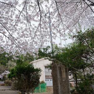 2021桜巡り 染井吉野@京北 旧宇津小学校