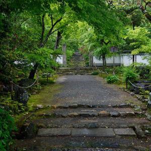 雨の新緑巡り@浄住寺