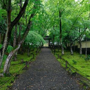 雨の新緑巡り@地蔵院