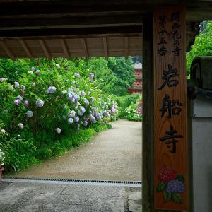 四季の花達 紫陽花@岩船寺