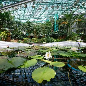 草津市立水生植物公園みずの森 其の三