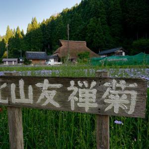 四季の花達 北山友禅菊@久多