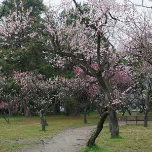 春の花巡り@雨の日の御所 其の二