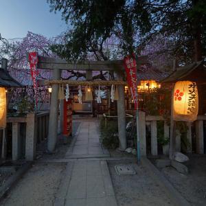 桜巡り2019@水火天満宮の夜桜