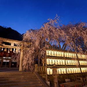 桜巡り2019@大石神社ライトアップ