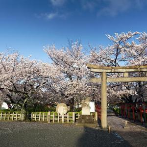 桜巡り2019@六孫王神社 散り景色