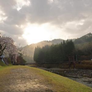 桜巡り2019@京北 魚ヶ渕の吊り橋