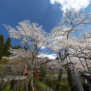 桜巡り2019@京北 安楽寺