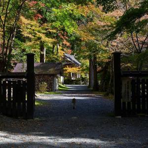 2018京都の紅葉・峰定寺