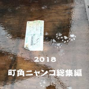町角ニャンコ・2018総集編