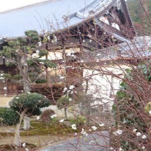 日々の暮らし 震災から24年
