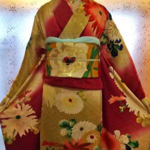 菊柄の染め分け振袖と水仙の袋帯