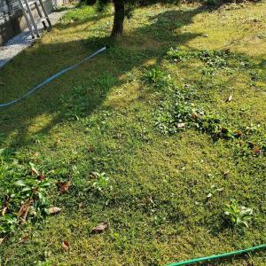 柿もぎ 落ち葉拾い 芝刈り