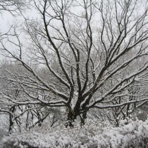 雪遊び記事タイトル