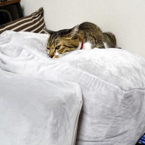 ビーズクッションとソファー