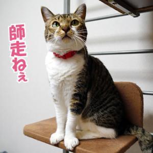 【号外~4猫総出でお知らせよ!】