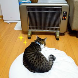 寒い日の猫たちは・・・