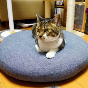 猫の耳と猫の距離感