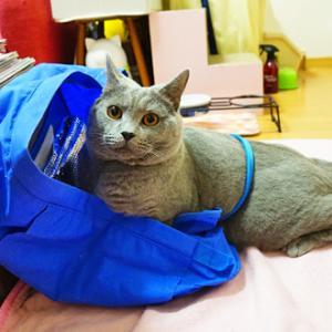 【夕刊~猫っていうのは…】
