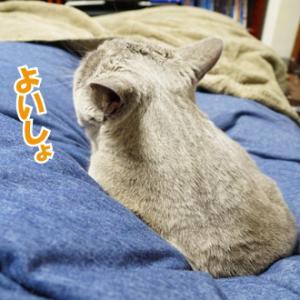 猫のカワイイは正義だ!